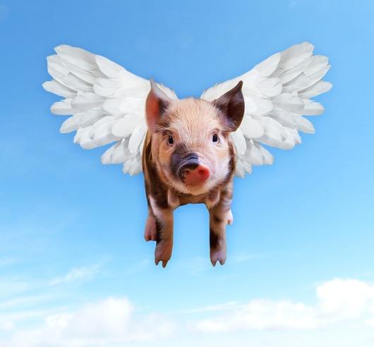 pigs-1520968_640