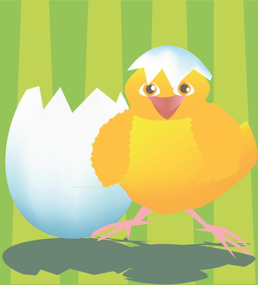 chicken-161948_640